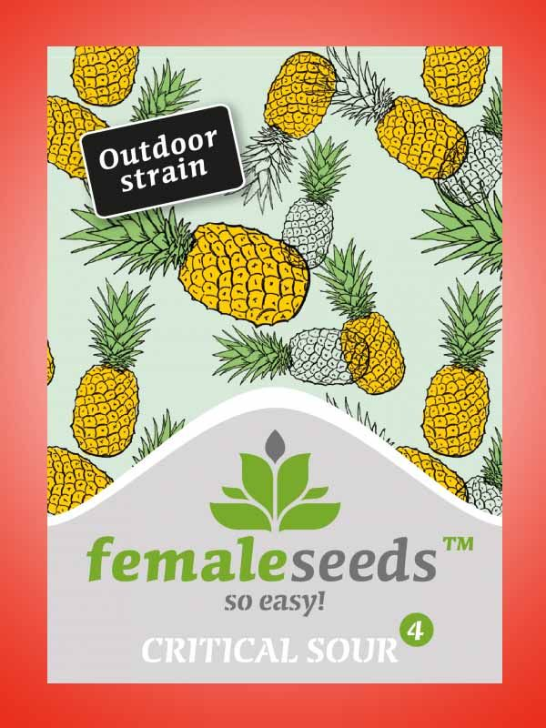 Critical sour Female Seeds Opakowanie