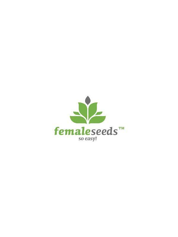 Female Seeds Nasiona marihuany i konopi