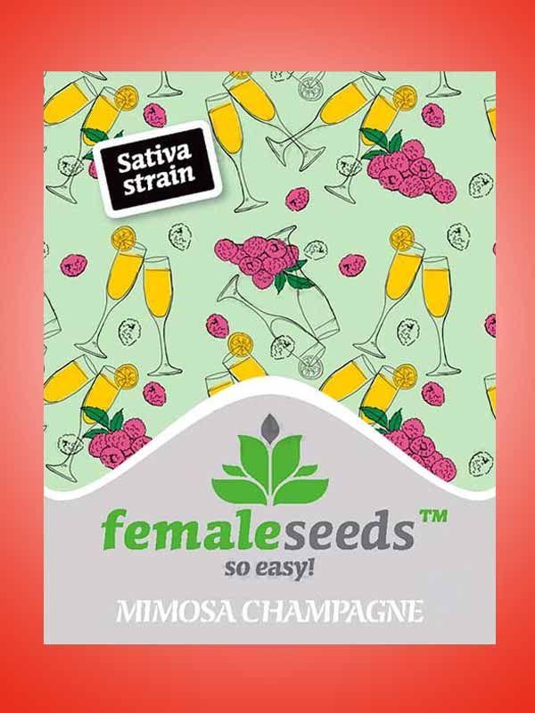 Minosa Champagne Female Seeds Opakowanie