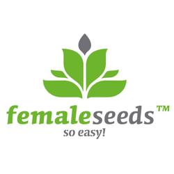 Female Seeds Nasiona marihuany