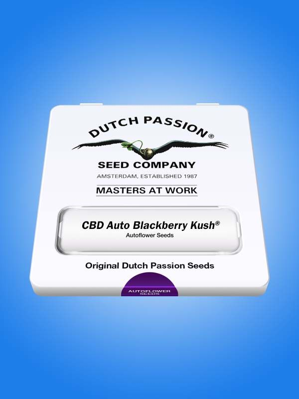 CBD Auto Blackberry Kush Dutch Passion Opakowanie