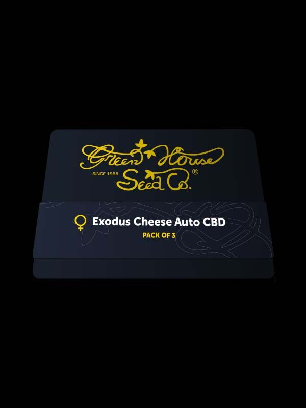 Exodus Cheese Auto CBD Nasiona