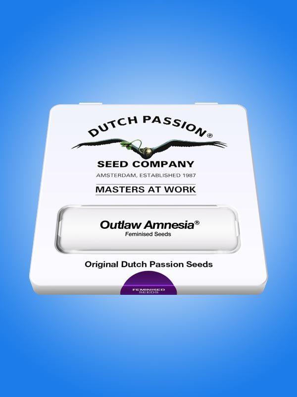 Outlaw Amnesia Dutch Passion Opakowanie