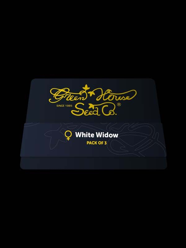 White Widow Nasiona