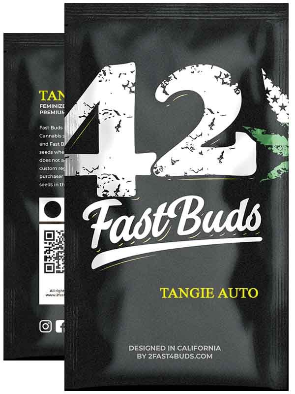 Tangie Auto Fast Buds Opakowanie