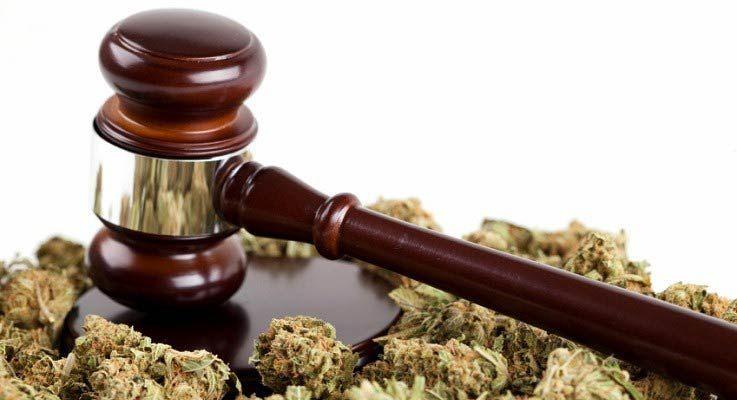 prawo nasiona marihuany