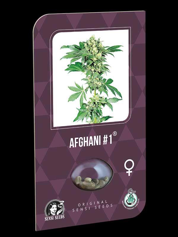 Afghani 1 Sensi Seeds Nasiona