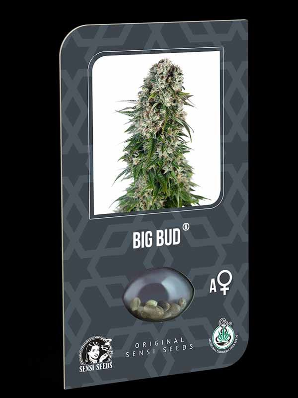 Big Bud Automatic Sensi Seeds Nasiona