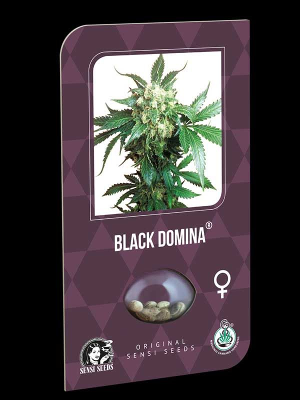 Black Domina Sensi Seeds Nasiona
