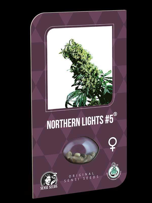 Northern Lights #5 x Hazes Nasiona
