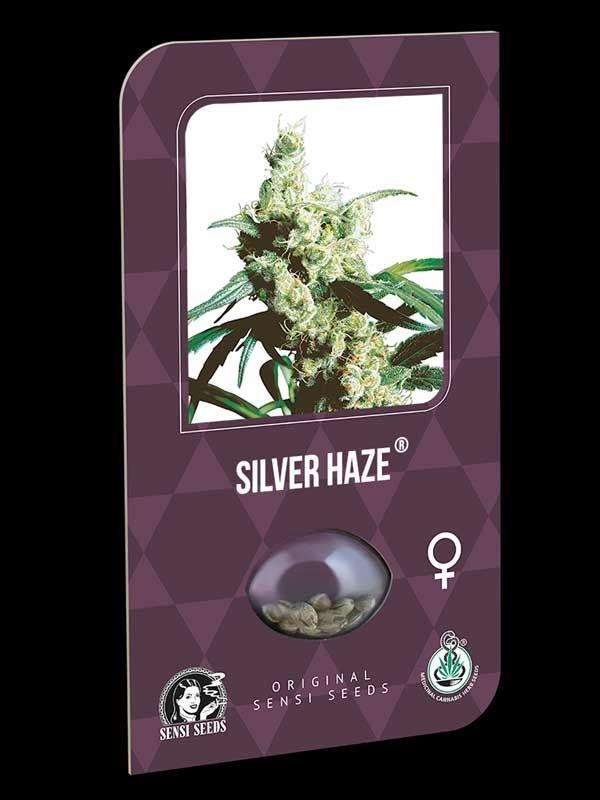 Silver Haze Sensi Seeds Nasiona