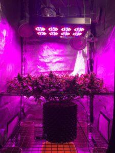 Indoor nasiona do uprawy w pomiesczeniach