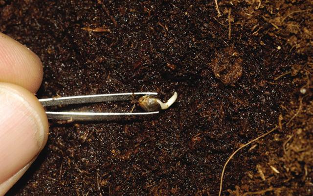 jak wykielkowac nasiona