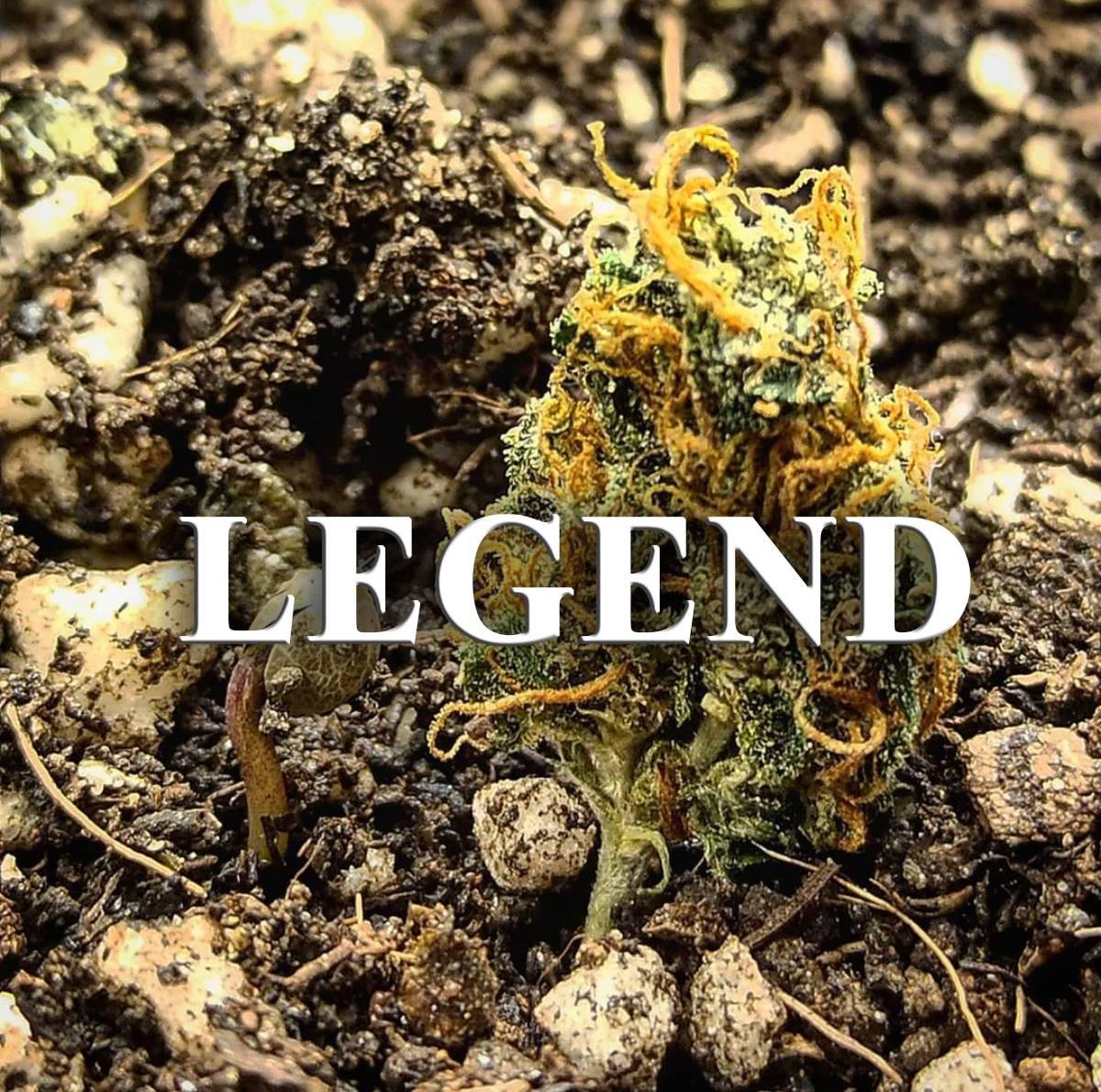 legendarne odmiany marihuany