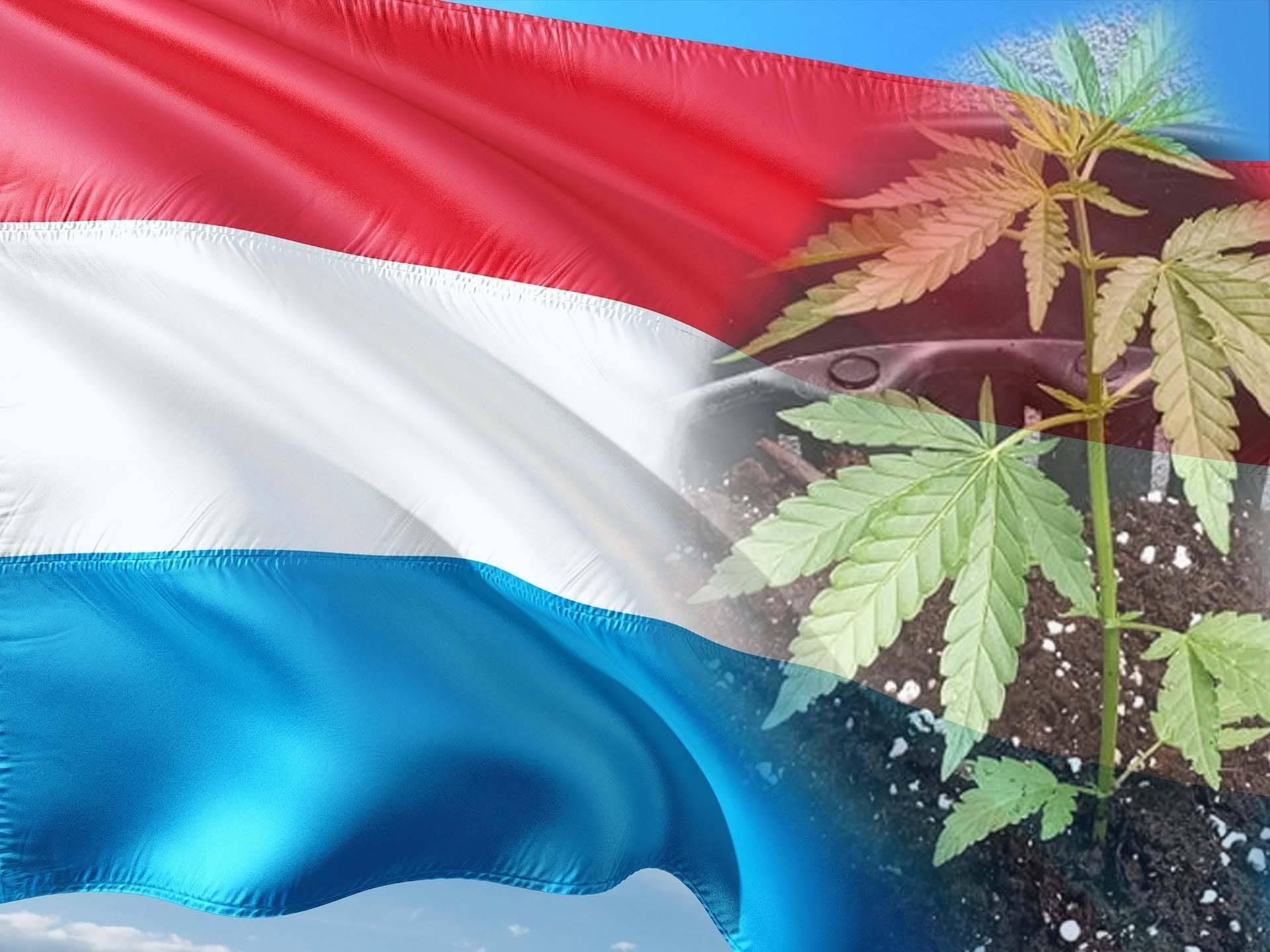 uksemburg legalizacja marihuany